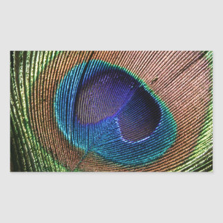 Peacock feather beautiful blue rectangle stickers