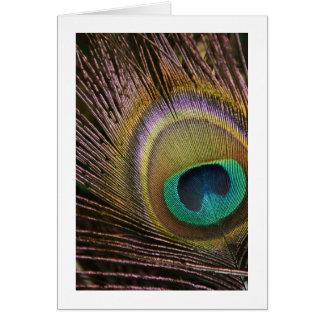 Peacock Feather Blank Card