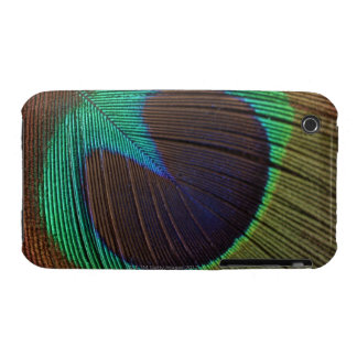 Peacock feather iPhone 3 cover