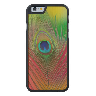 Peacock feather close-up carved® maple iPhone 6 slim case
