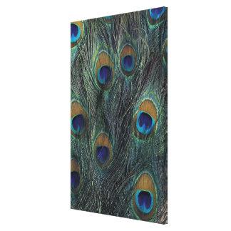 Peacock feather design canvas print