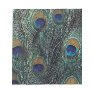 Peacock feather design notepad