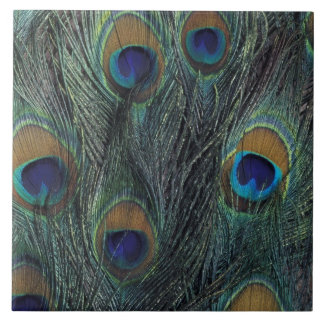 Peacock feather design tile