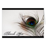 Peacock Feather Glamour Thank You