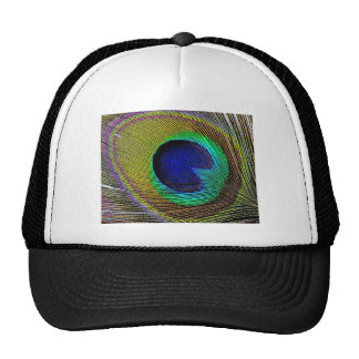 Peacock feather hats