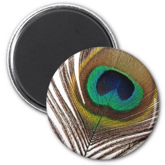 Peacock feather magnet