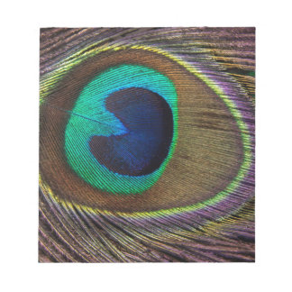 Peacock Feather On Right Side Close-Up Notepad
