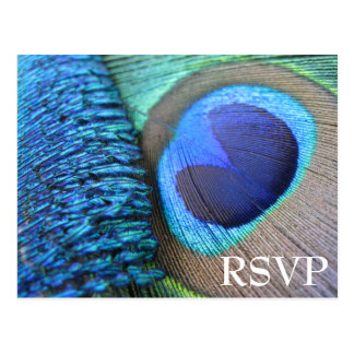 Peacock Feather RSVP Postcard