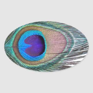 Peacock Feather Oval Sticker