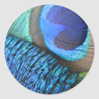 Peacock Feather Sticker (plain)