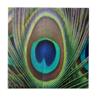 Peacock feather tile