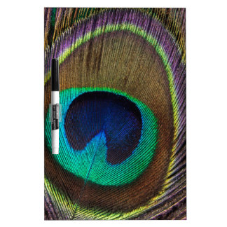 Peacock Feather Upright Close-Up Dry-Erase Whiteboards