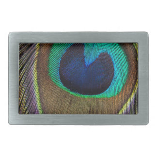 Peacock Feather Upside Down Close-Up Rectangular Belt Buckles