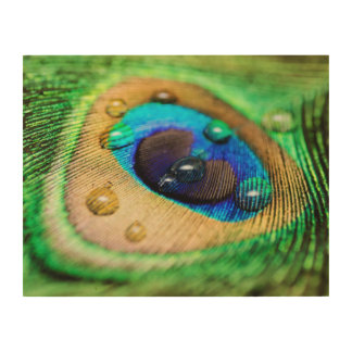 Peacock Feather Water Drops Macro Abstract Canvas Wood Print
