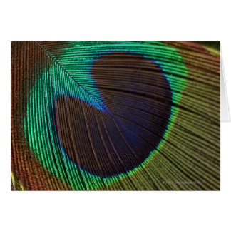 Peacock feathers 3 card