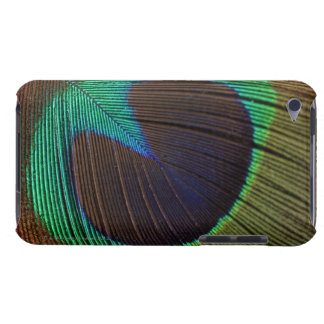 Peacock feathers 3 iPod touch case