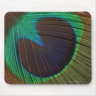 Peacock feathers 3 mouse mat
