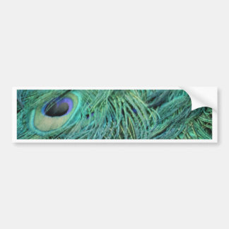 Peacock Feathers Bumper Sticker