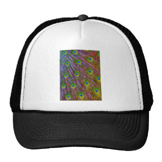 Peacock Feathers Mesh Hat