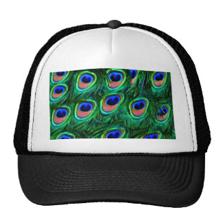 Peacock feathers_ cap