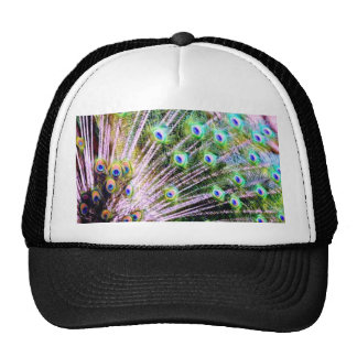 Peacock Feathers Cap
