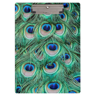 Peacock Feathers Clipboard