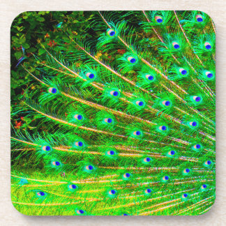 Peacock Feathers Coaster