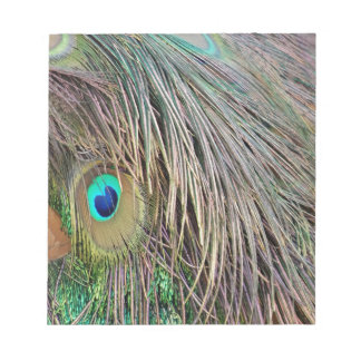 Peacock Feathers Dashing Colors Notepad