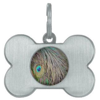 Peacock Feathers Dashing Colors Pet Name Tag