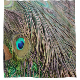 Peacock Feathers Dashing Colors Shower Curtain