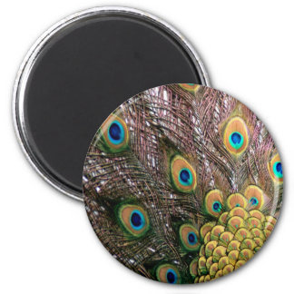 Peacock Feathers Emerald Green and Gold 6 Cm Round Magnet