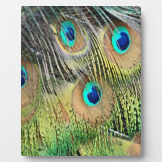 Peacock Feathers Eyes All New Growth Plaque