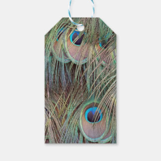 peacock feathers gift tags