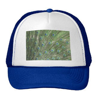 Peacock Feathers Trucker Hats