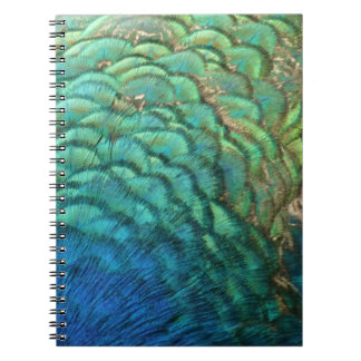 Peacock Feathers I Colorful Abstract Nature Design Notebooks