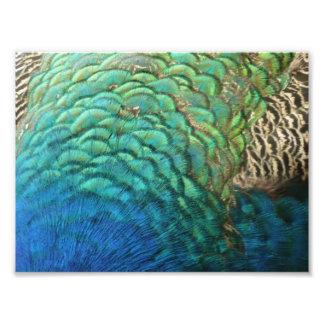 Peacock Feathers I Colorful Abstract Nature Design Photo Print