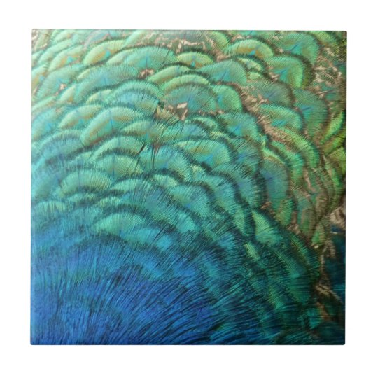 Peacock Feathers I Colourful Abstract Nature Small Square