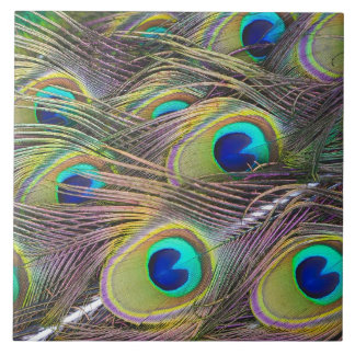 Peacock Feathers Large Square Tile