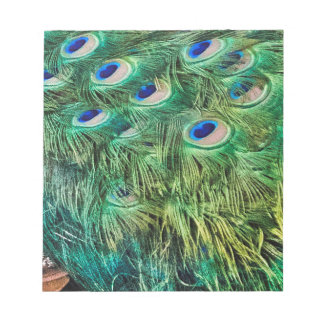 Peacock Feathers Notepad