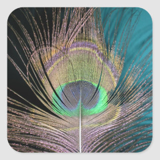 Peacock Feathers on black and turquoise Square Sticker