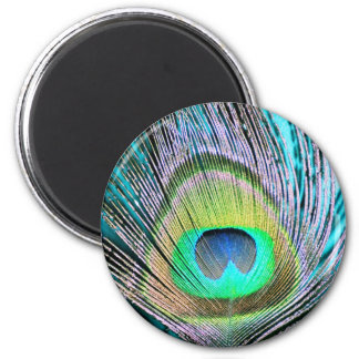 Peacock Feathers on turquoise 6 Cm Round Magnet
