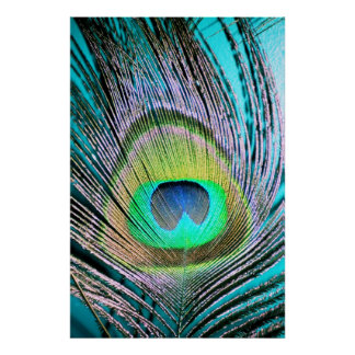 Peacock Feathers on turquoise Print