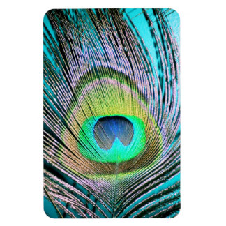 Peacock Feathers on turquoise Rectangular Photo Magnet