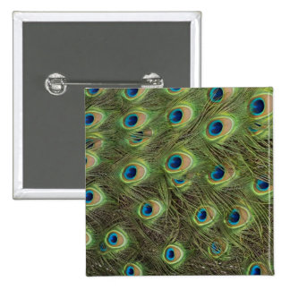 Peacock Feathers Pattern Buttons