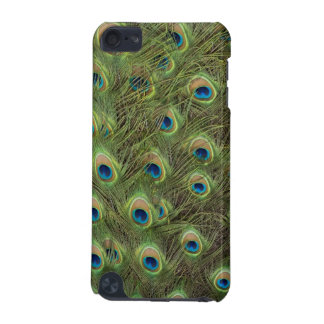 Peacock Feathers Pattern iPod Touch 5G Cover