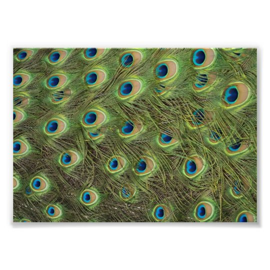 Peacock Feathers Pattern Photo Print