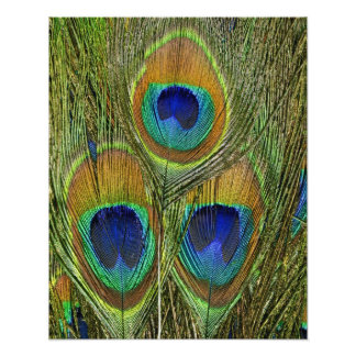 Peacock Feathers Photo Print