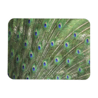 Peacock Feathers Vinyl Magnet