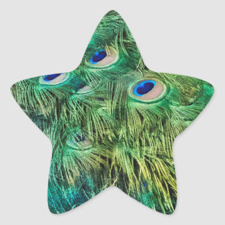 Peacock Feathers Star Sticker