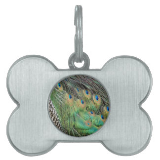 Peacock Feathers Tan Green And blue Colors Pet Name Tag